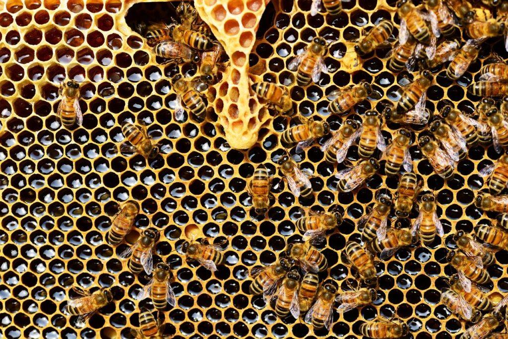 Jak chronić pszczoły przed wyginięciem?